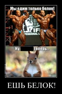 белки