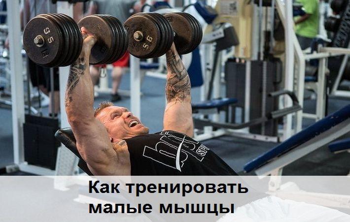 малые мышцы