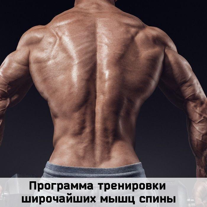 Программа тренировки
