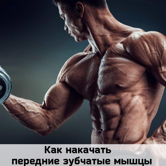 зубчатые мышцы
